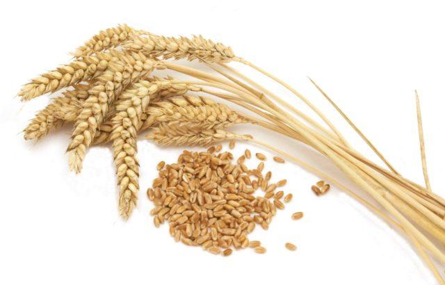 Tarwe voor gluten-zetmeel scheiding